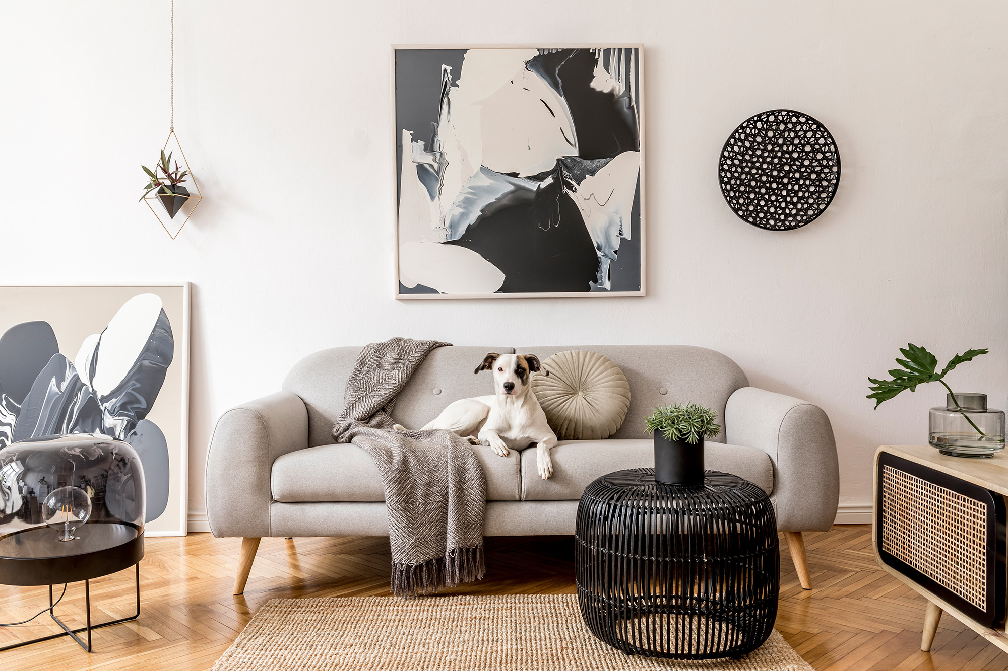 dog seating on a sofa in a very modern living room